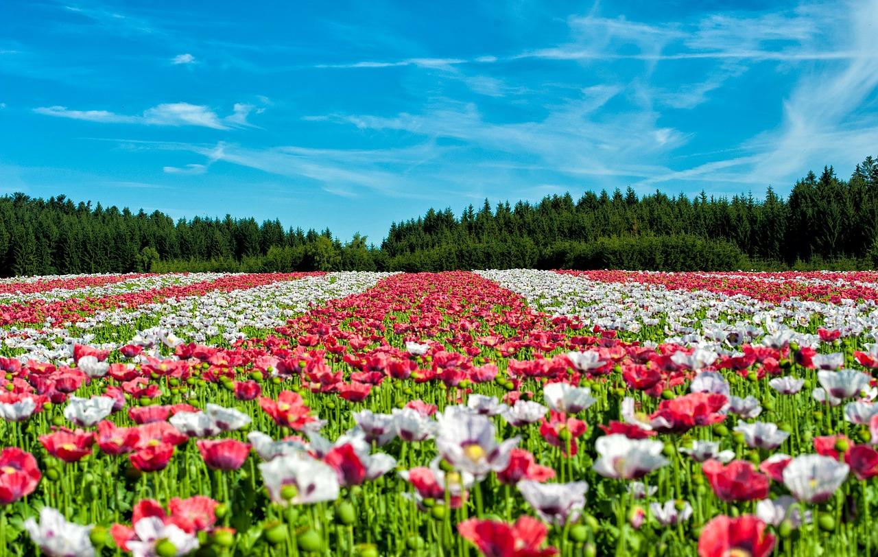 flowers-63755_1280